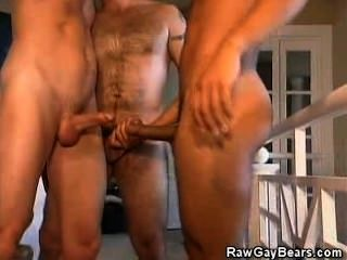 Cock Sucking Threesome Hairy Men
